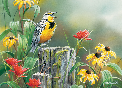 Meadowlark Morning