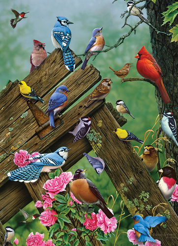 Birds of the Forest